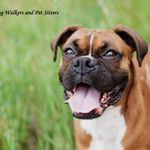 Welwyn Dog Walkers And Pet Sitters profile image.