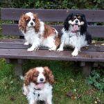 Furry Faces Pet Care Services Ltd profile image.