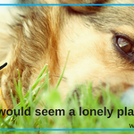 Make Your Dog Smile profile image.