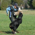 Haus Juris German Shepherds profile image.