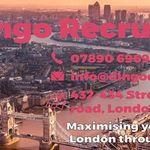 Dingo Recruitment profile image.