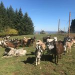 Portland Party Goats profile image.