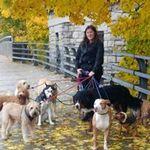 716 Dog Pack profile image.