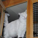 Le Chateau Pet Resort profile image.