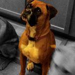 Forever Pets, Inc. profile image.