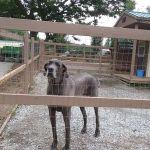 Dancing Creek Farm profile image.