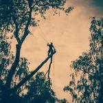 Hocus Crocus Gardens & Trees profile image.