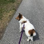 Spot-ified Pet Sitting profile image.