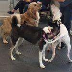 Sugar Paws Dog Training profile image.