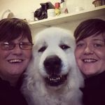 Leconfield Kennels & Cattery profile image.