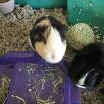 Duke Small Pet Care profile image.