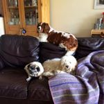 Woofpatrol Dog Walking and Pet Sitting Services Blackpool profile image.