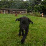 Pawsome Pet Services profile image.