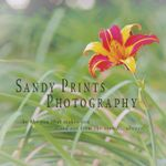 Sandy Prints Photography profile image.