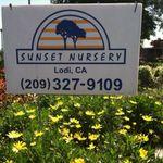Sixto's Sunset Nursery profile image.