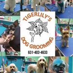 TigerLily's Dog Grooming profile image.