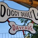 Doggy DooLil Daycare & PackLeader Obedience profile image.