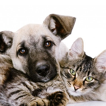 The Cat and Dog Nanny profile image.