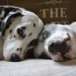 Best friends pet services profile image.