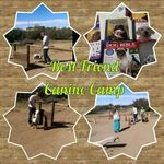 Best Friend Canine Camp profile image.