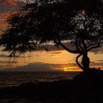 MSI Maui profile image.