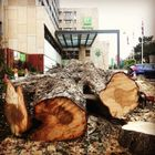 Cardiff tree surgery