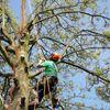 Sharps tree services ltd profile image