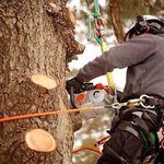 The Tree Fellas Hull LTD profile image.