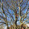 Hawkins tree services  profile image