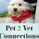Pet 2 Vet Connections Lubbock profile image.