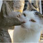 Kernow Kitties profile image.