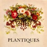 Plantiques Flowers by Brenda Fry profile image.