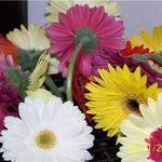Provo Florist profile image.