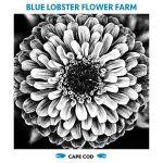 Blue Lobster Flower Farm profile image.