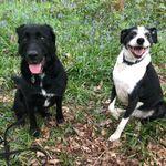 The Leamington Dog Walking Co profile image.