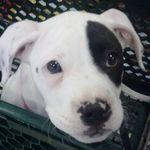 Amy's Pet Care Plus profile image.