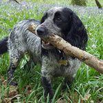 Starz Dog Grooming profile image.