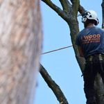 I wood Tree services profile image.