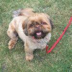 Yes Good Dog - Solihull profile image.