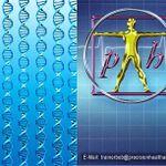 Precision Health And Wellness profile image.