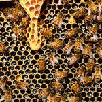 Professional Pest Management profile image.