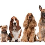 Top Dogs Professional Pet Services  profile image.