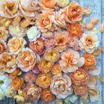www.lucysflowersnyc.com profile image.