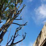 Boningale Tree Services profile image.