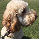 Puddles and Paws Petcare profile image.