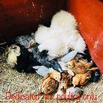PomPom Poultry & Herbal Supplements LTD profile image.