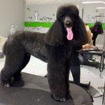 Oh my Dog profile image.