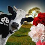 Dani Becca Graphics profile image.