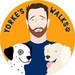 Yorke's Walks - Private Dog Walking Service profile image.