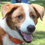 Hounddog Photography profile image.